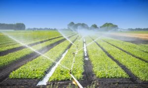 agriculture-waste-water